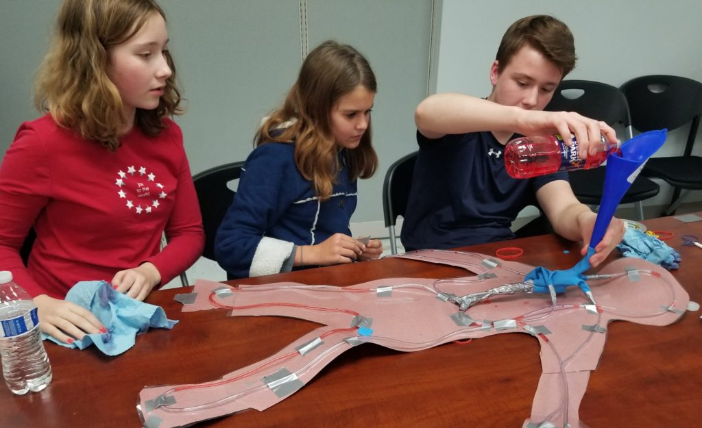 students learning how the heart pumps blood throughout the body