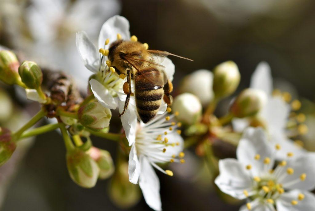 Bee visiting flower