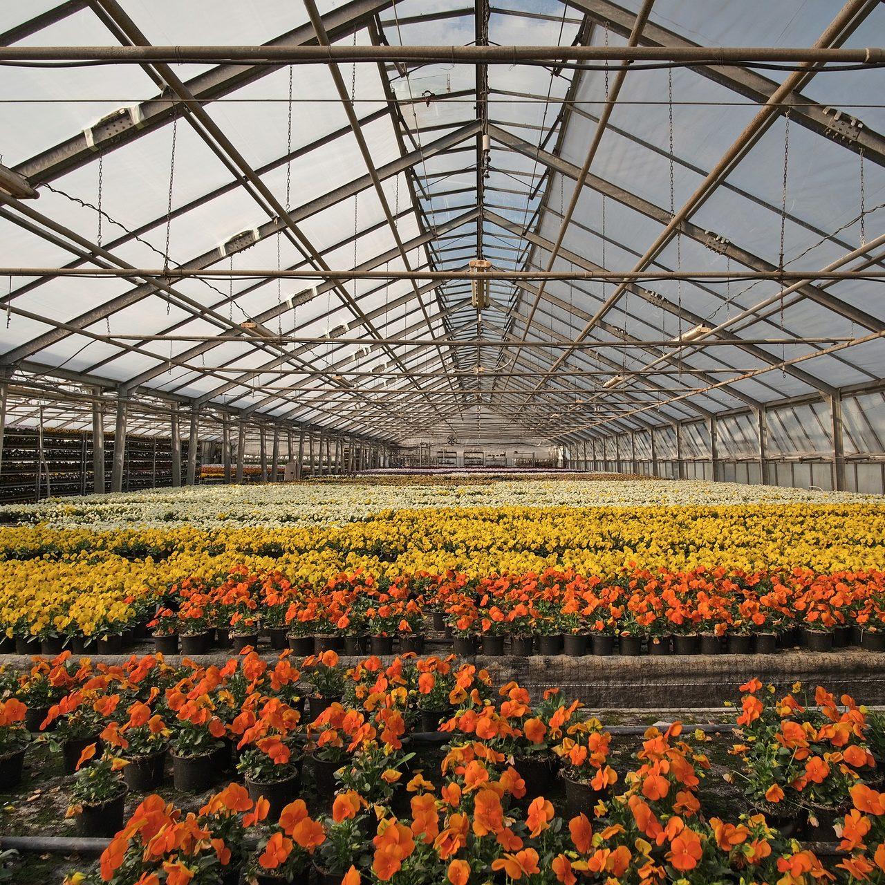 Greenhouse Annuals